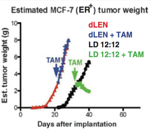 Breast tumor growth in rats: dLen are mice with more light at night - their tumors grow faster and they are resistant to Tam(oxifen). LD12:12 rats have alternate light-dark cycles and their tumors grow slower, and respond to Tam by shrinking.