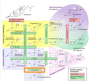 "Häggström M, Richfield D (2014). ""Diagram of the pathways of human steroidogenesis"". Wikiversity Journal of Medicine 1 (1). DOI:10.15347/wjm/2014.005. ISSN 20018762. - Self-made using bkchem and inkscape"
